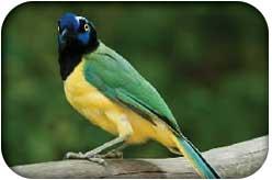 fauna parque nacional el avila