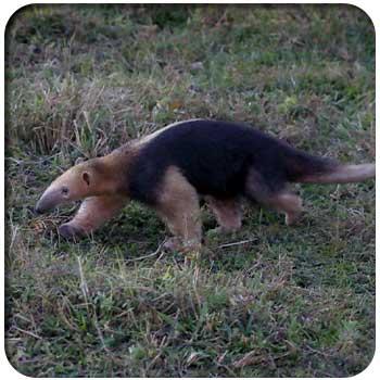 Fauna Parque Nacional Henri Pittier 02
